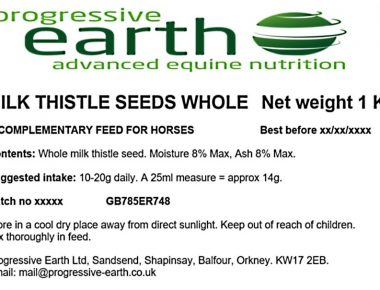 Milk thistle seeds whole. A powerful antioxidant for horses and ponies